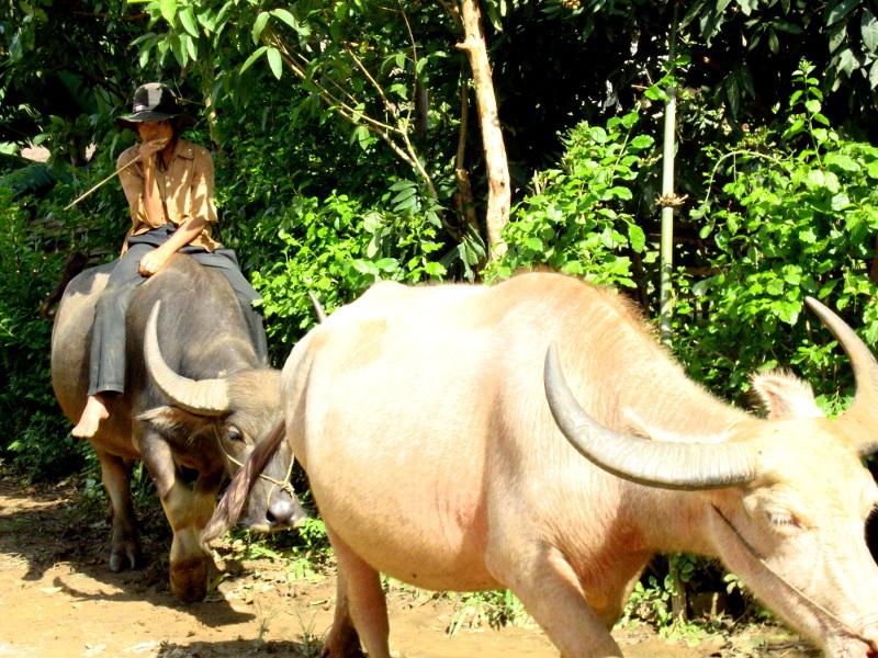 Guide trek viêt-nam
